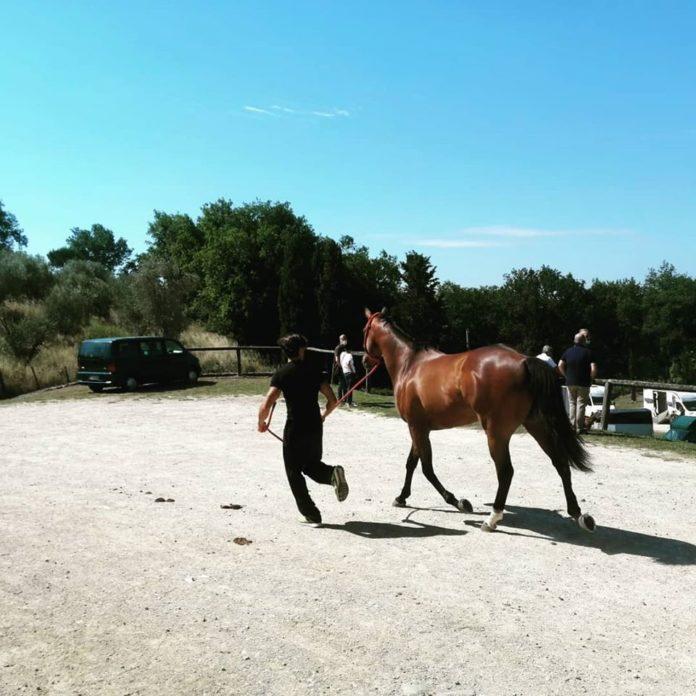Pensionario cavalli da Palio, firmata la convenzione triennale
