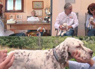 Matteo Zamagni ancora alla Emma Villas Siena