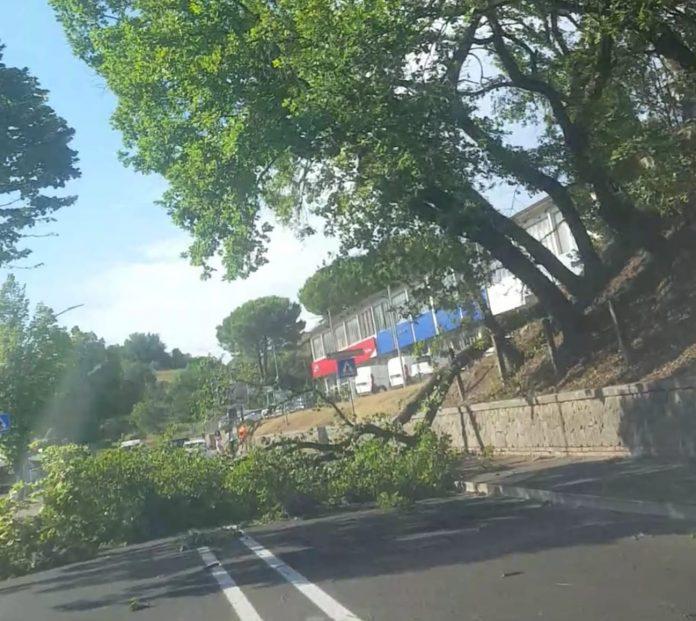 """Il vento danneggia lo stadio """"Antonio Scialoja"""" e un albero blocca il traffico in viale Toselli"""