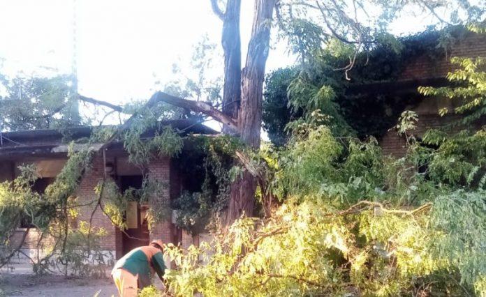 """Albero crolla sulla sede dell'Associazione Radioamatori """"Il Palio"""""""