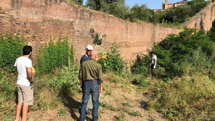 Iniziata la pulizia delle mura cittadine: contrade e associazioni al lavoro