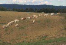 Coronavirus, 13 nuovi casi positivi in provincia di Siena