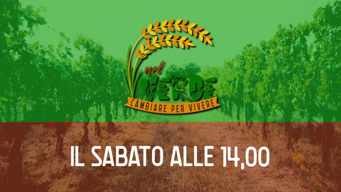 """""""Nel Verde"""": al via oggi alle 14 su Siena TV il nuovo programma su agricoltura e sostenibilità"""