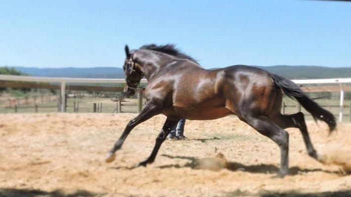 Albo Cavalli da Palio: oltre cento gli iscritti alle previsite del 14 e 15 marzo