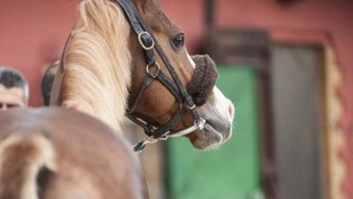 Albo cavalli 2021: ecco i 169 soggetti iscritti