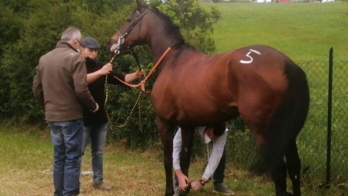 "Un altro anno di stop per i proprietari di cavalli, Calamassi: ""Situazione drammatica"""