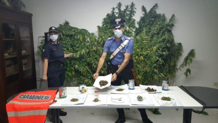 Coltivava marijuana tra Torrita di Siena e Trequanda: arrestato dai Carabinieri