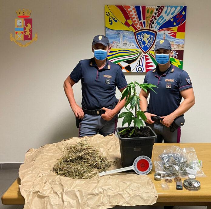 Asciano: coltiva marijuana in una serra, la Polizia lo arresta